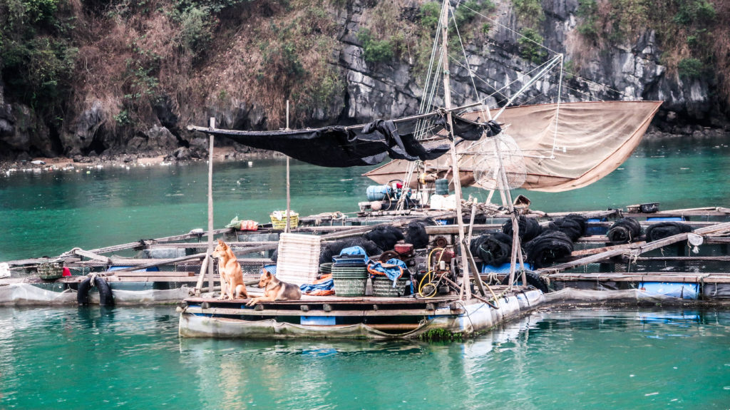Floating villages Ha Long Bay