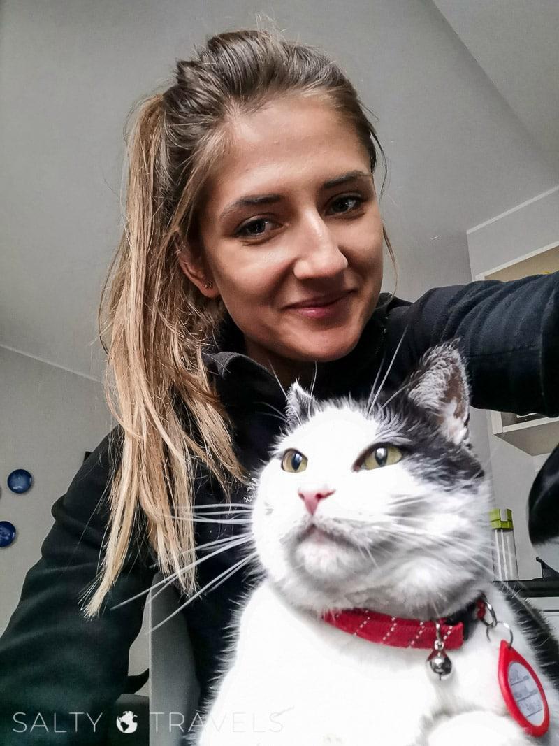 Koty w Reykjaviku