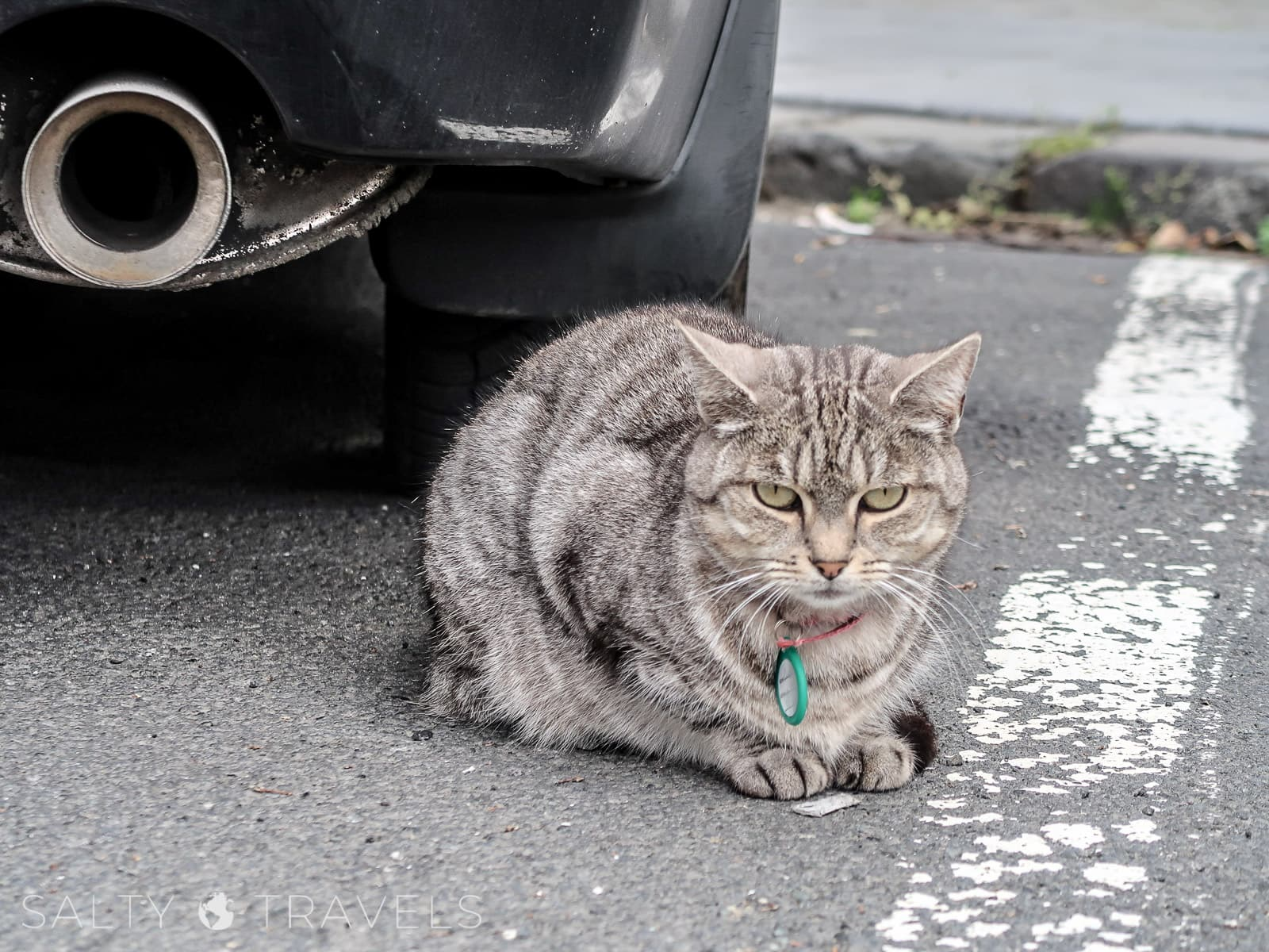 kwarantanna w Reykjaviku - koty